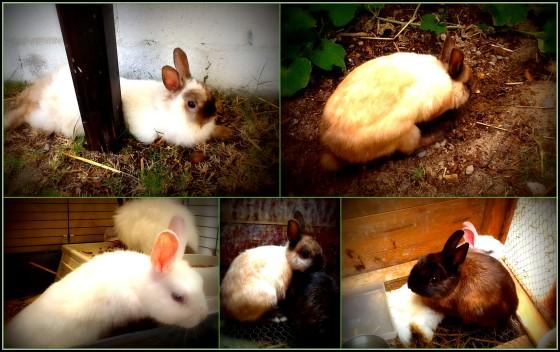 The Little Rabbitry