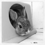 Bunny in black and white